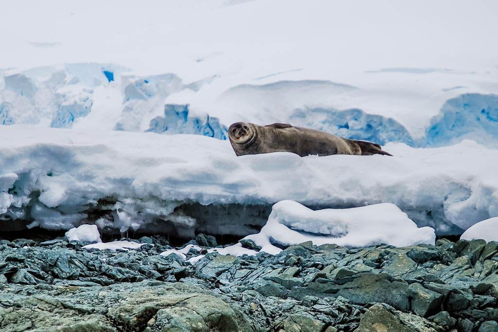 Antártida, Dallman Bay, Enterprise Island, por libre, viaje exploración, viaje solo, Wilhelmina Bay