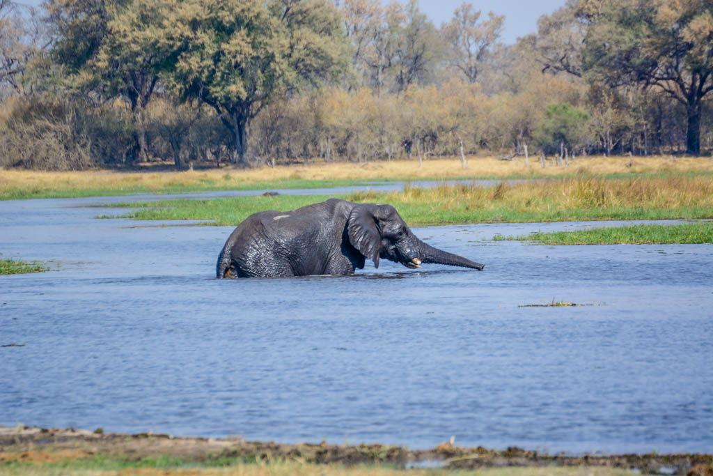 agencia especializada, botswana, Delta, Khwai, Mbabe, Moremi, Okavango, safari, Savuti, viaje con amigos, Xhobega