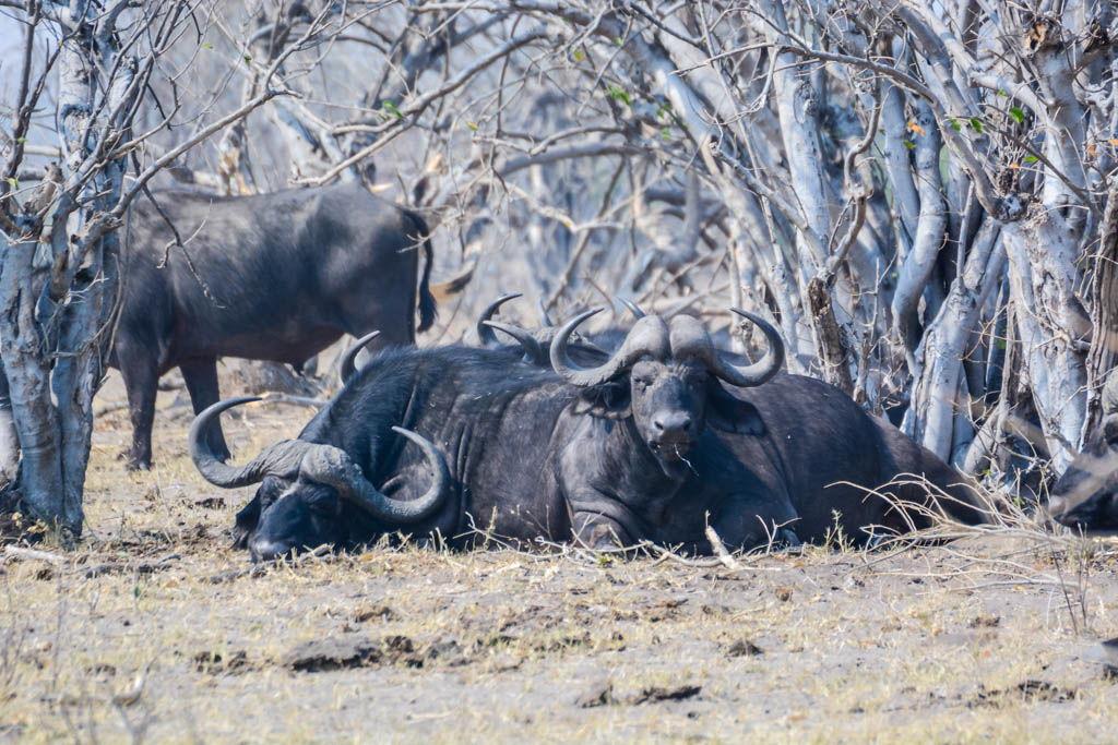 agencia especializada, botswana, Chobe, Kasane, safari, viaje con amigos